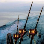 Hey Man's Honey Tuna Charters